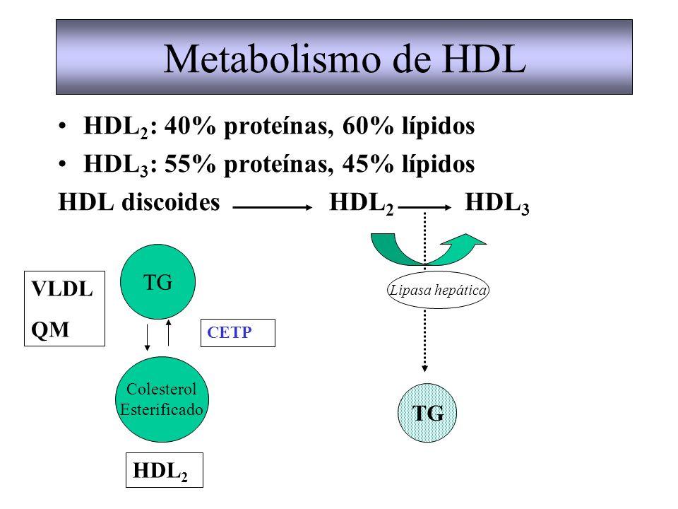 HDL 2 : 40% proteínas, 60% lípidos HDL 3 : 55% proteínas, 45% lípidos HDL discoidesHDL 2 HDL 3 Metabolismo de HDL Colesterol Esterificado TG VLDL QM H