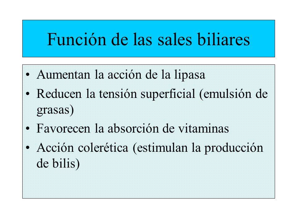 Función de las sales biliares Aumentan la acción de la lipasa Reducen la tensión superficial (emulsión de grasas) Favorecen la absorción de vitaminas