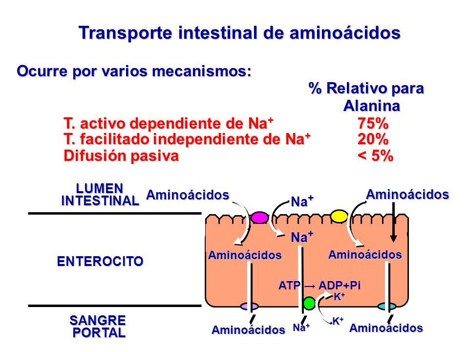 Transporte intestinal de aminoácidos Ocurre por varios mecanismos: % Relativo para Alanina % Relativo para Alanina T. activo dependiente de Na + 75% T