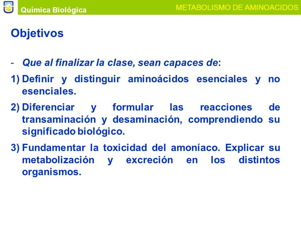 Objetivos -Que al finalizar la clase, sean capaces de: 1)Definir y distinguir aminoácidos esenciales y no esenciales. 2)Diferenciar y formular las rea