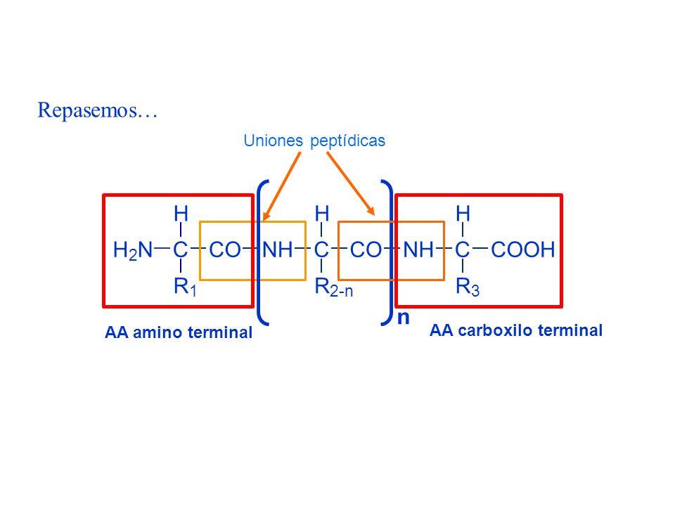 H 2 NC H R 1 CONHC H CO R 2-n NHC H R 3 COOH n Repasemos… AA amino terminal AA carboxilo terminal Uniones peptídicas