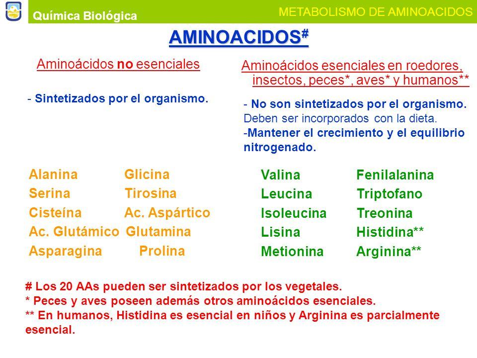 AMINOACIDOS # Aminoácidos esenciales en roedores, insectos, peces*, aves* y humanos** Aminoácidos no esenciales Química Biológica METABOLISMO DE AMINO