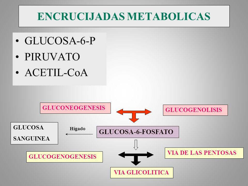 ENCRUCIJADAS METABOLICAS GLUCOSA-6-P PIRUVATO ACETIL-CoA GLUCOSA-6-FOSFATO GLUCONEOGENESIS GLUCOGENOLISIS GLUCOGENOGENESIS GLUCOSA SANGUINEA VIA DE LA