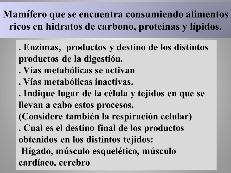Mamífero que se encuentra consumiendo alimentos ricos en hidratos de carbono, proteínas y lípidos.. Enzimas, productos y destino de los distintos prod