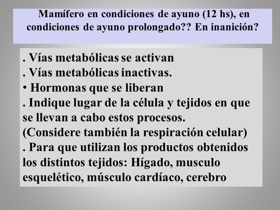 Mamífero en condiciones de ayuno (12 hs), en condiciones de ayuno prolongado?? En inanición?. Vías metabólicas se activan. Vías metabólicas inactivas.