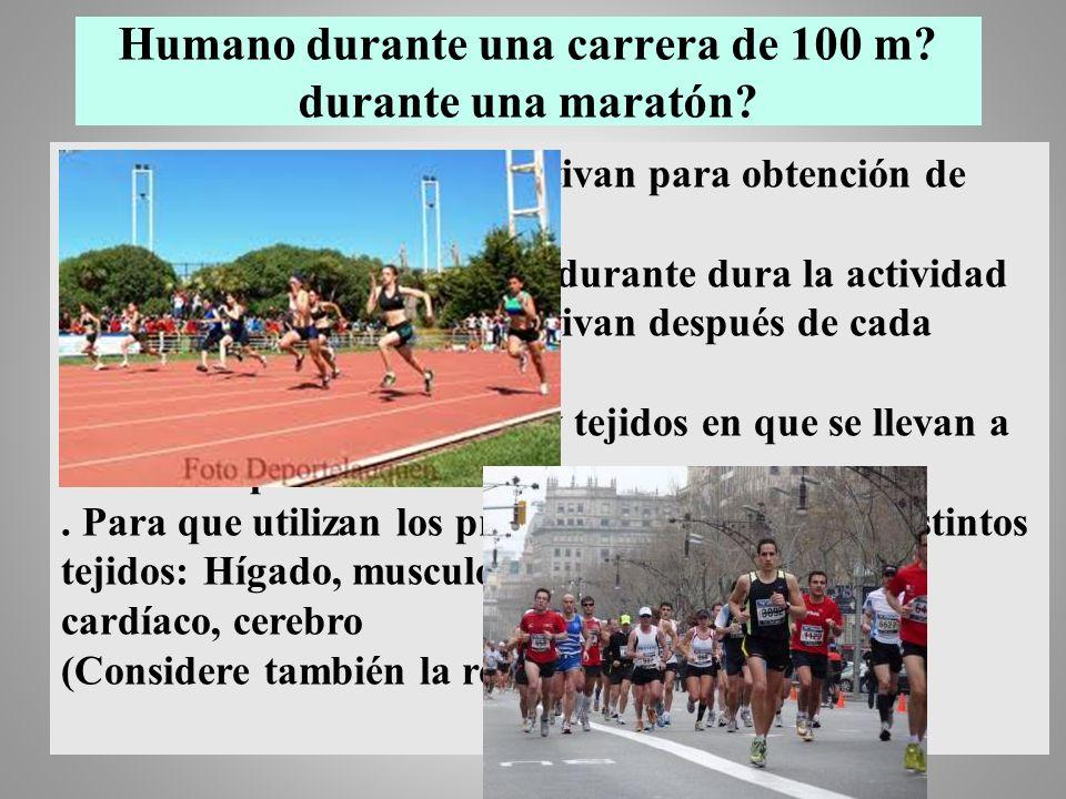 Humano durante una carrera de 100 m? durante una maratón?. Vías metabólicas que se activan para obtención de energía metabólica. Vías metabólicas inac