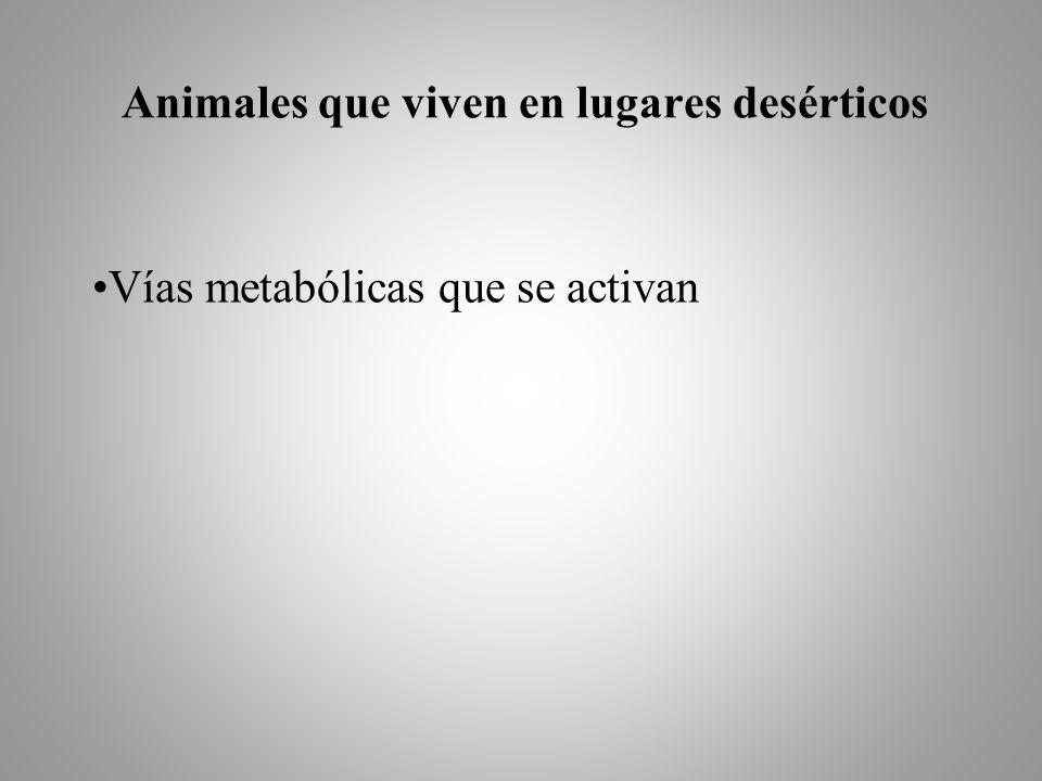 Animales que viven en lugares desérticos Vías metabólicas que se activan