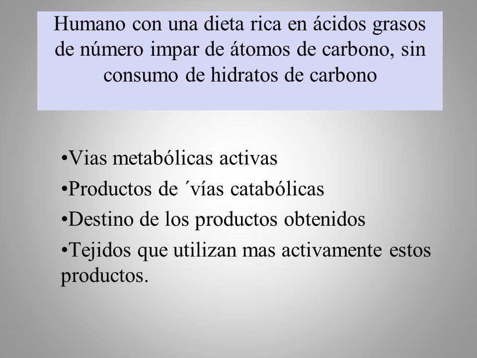 Humano con una dieta rica en ácidos grasos de número impar de átomos de carbono, sin consumo de hidratos de carbono Vias metabólicas activas Productos