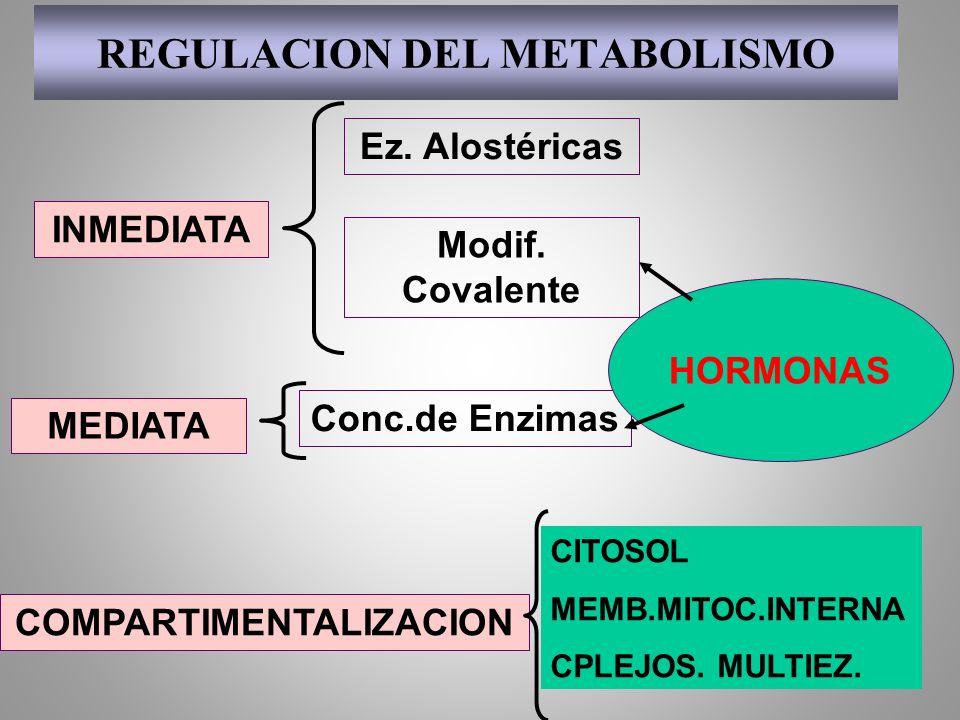 Metabolismo en el Músculo Actividad ligera o reposo Glucogeno muscular Lactato Acidos grasos Cuerpos cetonicos Glucosa en sangre CO 2 ADP+PiATP Contracción muscular Fosfocreatina Creatina Actividad intensa ATP Glicólisis >>>C.Krebs - CICLO DE CORI - CICLO GLU-ALA Actividad intensa