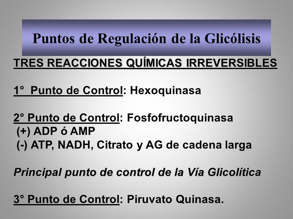 Puntos de Regulación de la Glicólisis TRES REACCIONES QUÍMICAS IRREVERSIBLES 1° Punto de Control: Hexoquinasa 2° Punto de Control: Fosfofructoquinasa