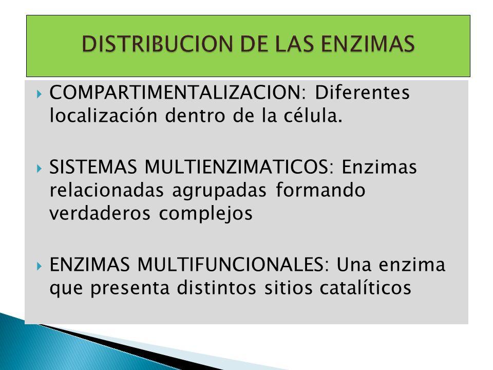COMPARTIMENTALIZACION: Diferentes localización dentro de la célula. SISTEMAS MULTIENZIMATICOS: Enzimas relacionadas agrupadas formando verdaderos comp