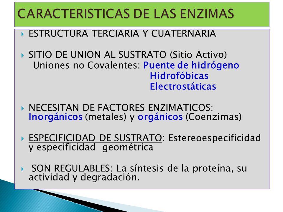 ESTRUCTURA TERCIARIA Y CUATERNARIA SITIO DE UNION AL SUSTRATO (Sitio Activo) Uniones no Covalentes: Puente de hidrógeno Hidrofóbicas Electrostáticas N