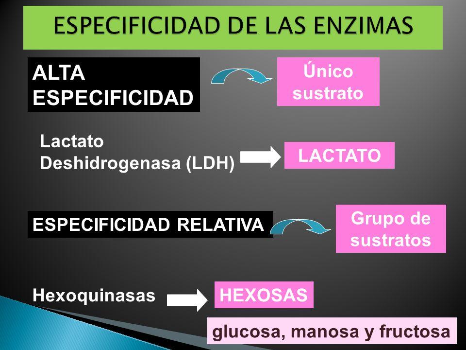 ALTA ESPECIFICIDAD Único sustrato Lactato Deshidrogenasa (LDH) LACTATO ESPECIFICIDAD RELATIVA Grupo de sustratos HexoquinasasHEXOSAS glucosa, manosa y