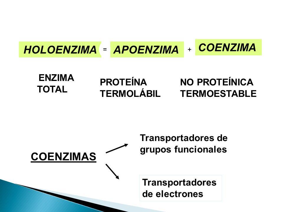ENZIMA TOTAL PROTEÍNA TERMOLÁBIL NO PROTEÍNICA TERMOESTABLE HOLOENZIMAAPOENZIMA COENZIMA =+ COENZIMAS Transportadores de grupos funcionales Transporta