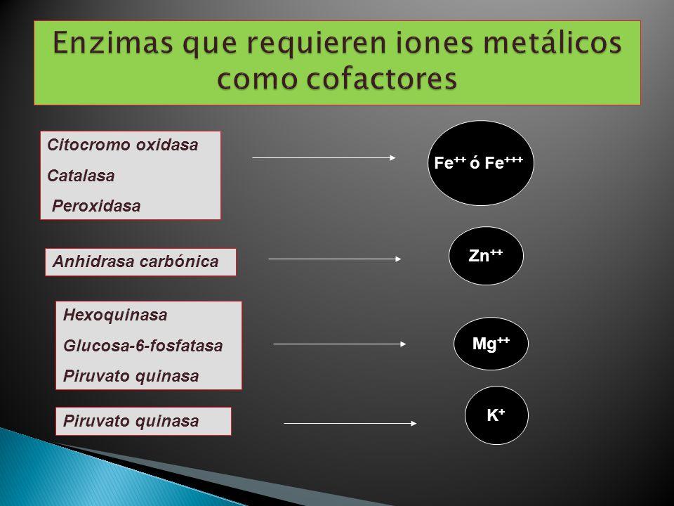 Citocromo oxidasa Catalasa Peroxidasa Fe ++ ó Fe +++ Anhidrasa carbónica Zn ++ Piruvato quinasa K+K+ Hexoquinasa Glucosa-6-fosfatasa Piruvato quinasa