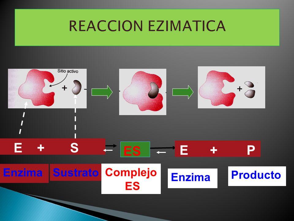 Enzima Producto SustratoEnzima E + S E + P Complejo ES