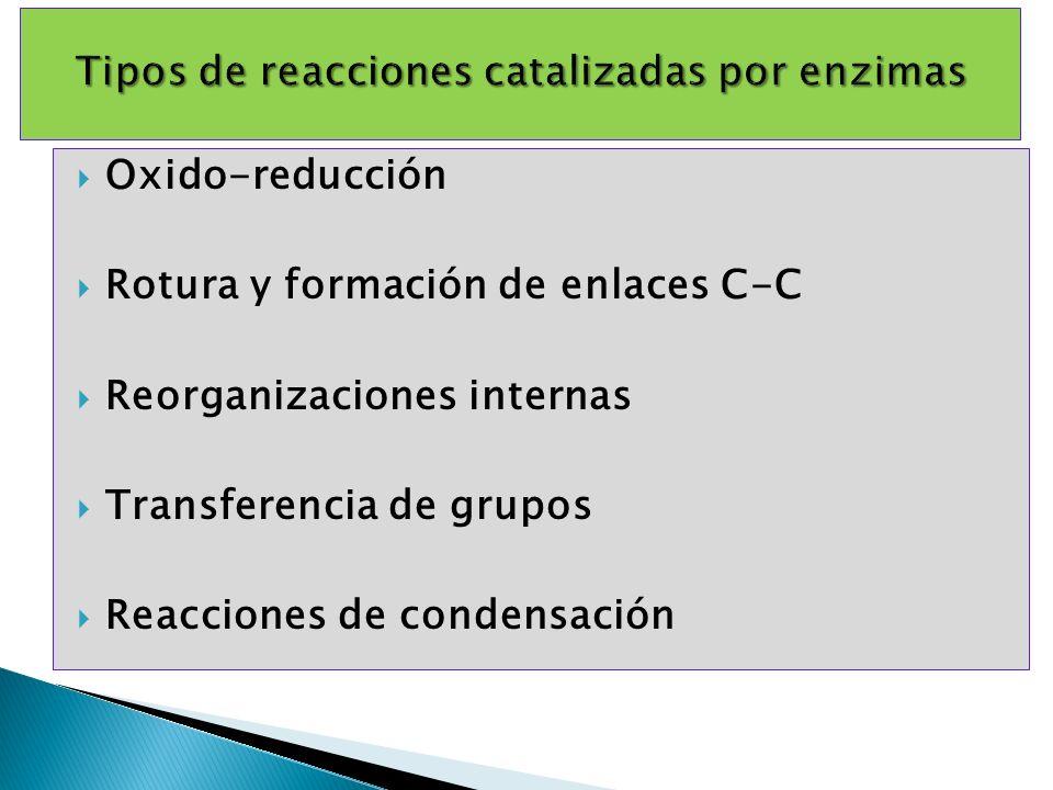 Oxido-reducción Rotura y formación de enlaces C-C Reorganizaciones internas Transferencia de grupos Reacciones de condensación