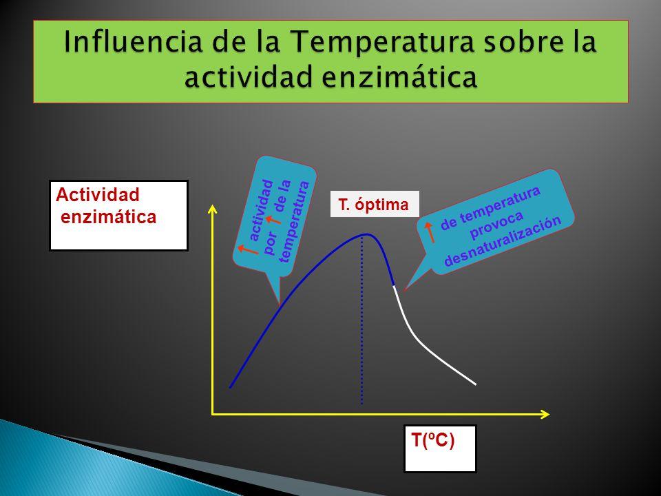 T(ºC) Actividad enzimática T. óptima actividad por de la temperatura de temperatura provoca desnaturalización