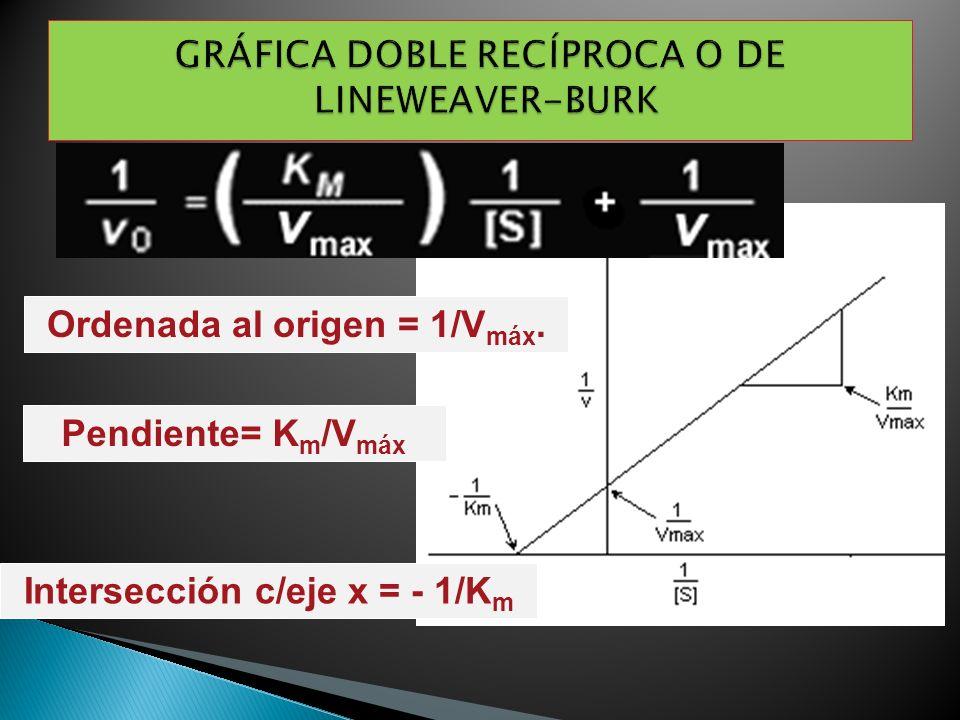 Pendiente= K m /V máx Intersección c/eje x = - 1/K m Ordenada al origen = 1/V máx.