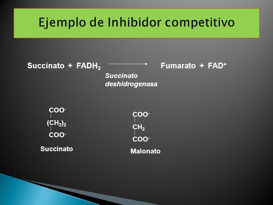COO - (CH 2 ) 2 COO - CH 2 COO - Succinato + FADH 2 Fumarato + FAD + Succinato deshidrogenasa Succinato Malonato