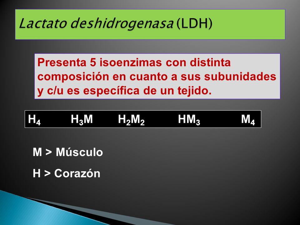 Presenta 5 isoenzimas con distinta composición en cuanto a sus subunidades y c/u es específica de un tejido. H 4 H 3 MH 2 M 2 HM 3 M 4 M > Músculo H >