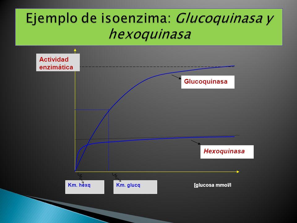 Hexoquinasa Glucoquinasa Actividad enzimática Km. hexqKm. glucq [glucosa mmol/l