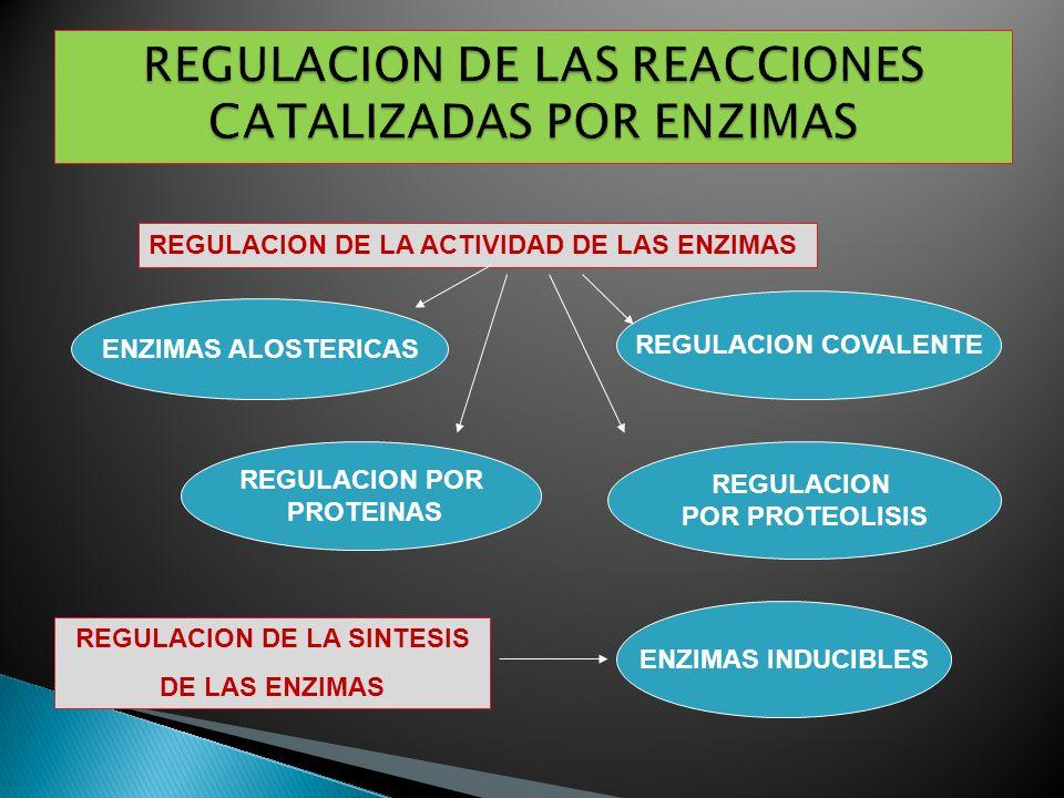 REGULACION DE LA ACTIVIDAD DE LAS ENZIMAS REGULACION DE LA SINTESIS DE LAS ENZIMAS ENZIMAS INDUCIBLES ENZIMAS ALOSTERICAS REGULACION COVALENTE REGULAC