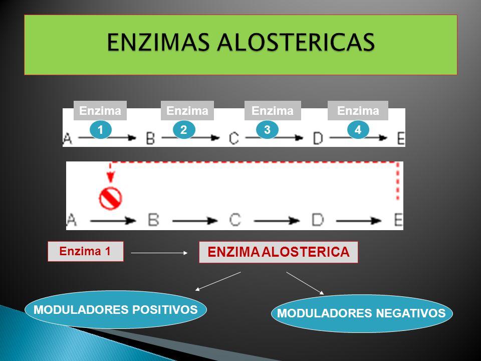 Enzima 1 ENZIMA ALOSTERICA MODULADORES POSITIVOS MODULADORES NEGATIVOS Enzima 1234