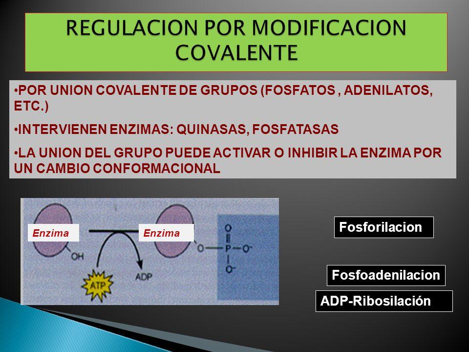Fosforilacion ADP-Ribosilación Enzima Fosfoadenilacion Enzima POR UNION COVALENTE DE GRUPOS (FOSFATOS, ADENILATOS, ETC.) INTERVIENEN ENZIMAS: QUINASAS