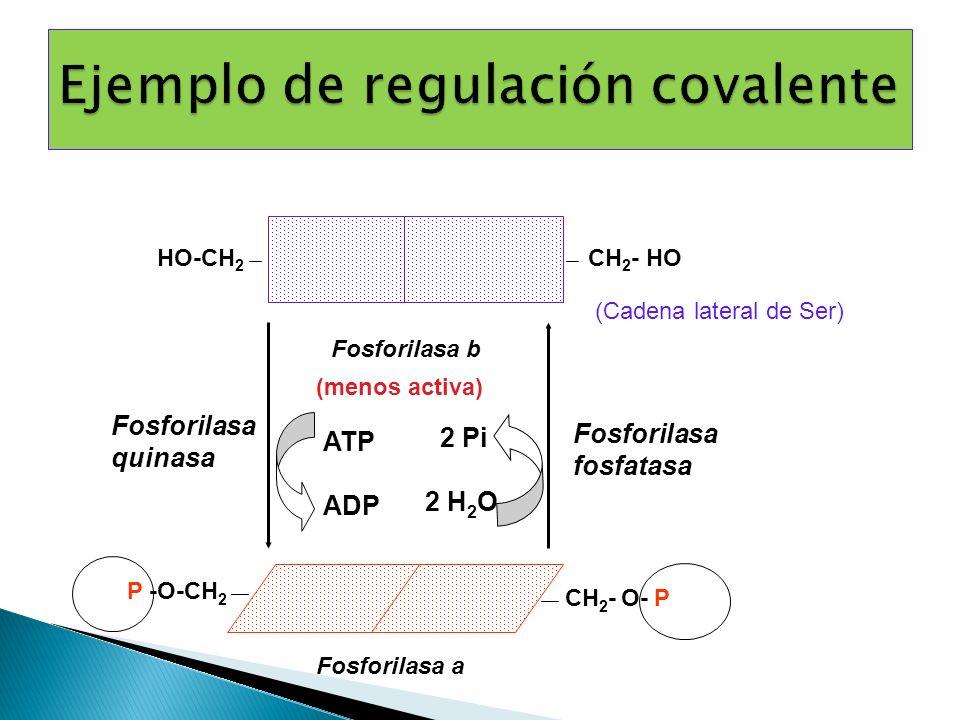 Fosforilasa fosfatasa 2 Pi 2 H 2 O Fosforilasa quinasa ATP ADP Fosforilasa b P -O-CH 2 CH 2 - O- P Fosforilasa a (menos activa) (Cadena lateral de Ser