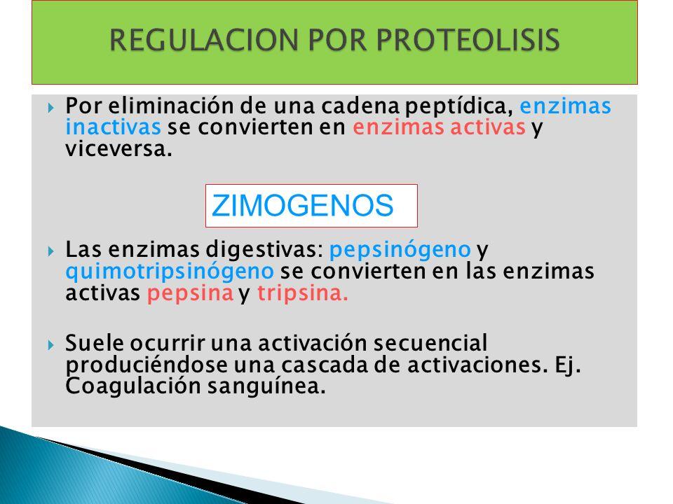 Por eliminación de una cadena peptídica, enzimas inactivas se convierten en enzimas activas y viceversa. Las enzimas digestivas: pepsinógeno y quimotr