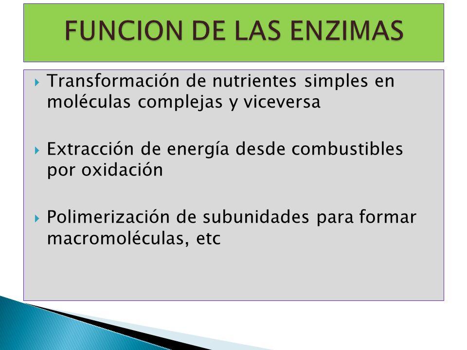 Transformación de nutrientes simples en moléculas complejas y viceversa Extracción de energía desde combustibles por oxidación Polimerización de subun