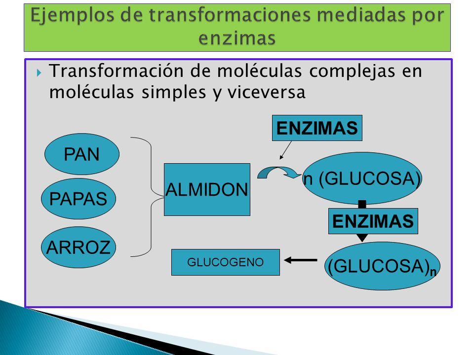 Transformación de moléculas complejas en moléculas simples y viceversa PAN PAPAS ARROZ ALMIDON GLUCOGENO (GLUCOSA) n n (GLUCOSA) ENZIMAS