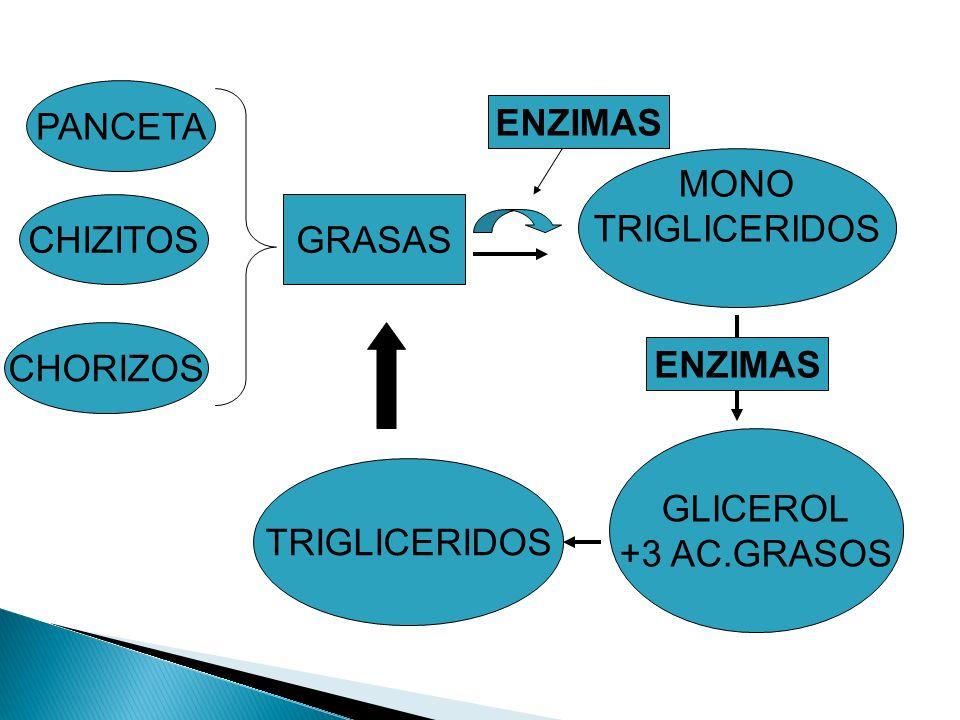 PANCETA CHIZITOS CHORIZOS GRASAS TRIGLICERIDOS MONO TRIGLICERIDOS ENZIMAS GLICEROL +3 AC.GRASOS