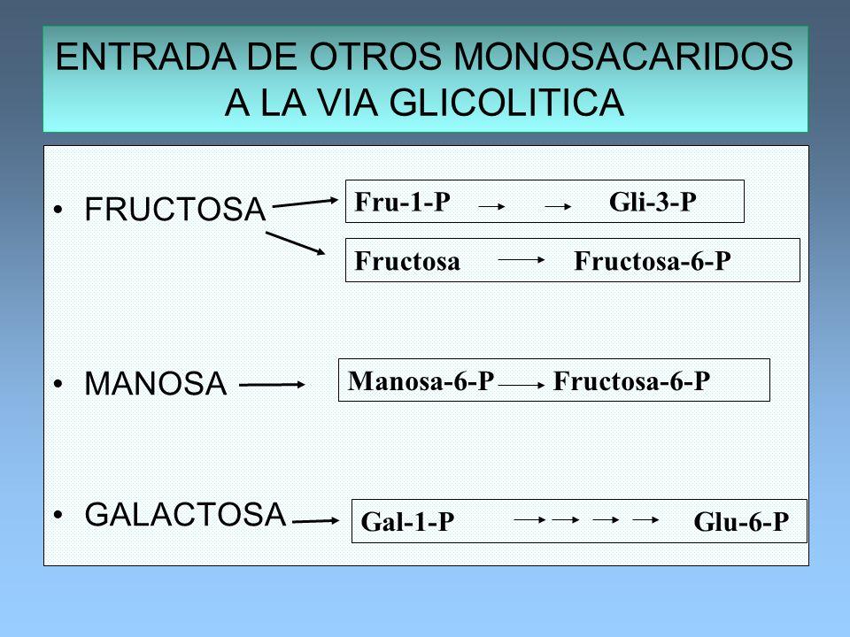 FRUCTOSA MANOSA GALACTOSA ENTRADA DE OTROS MONOSACARIDOS A LA VIA GLICOLITICA Gal-1-P Glu-6-P Fru-1-PGli-3-P Fructosa Fructosa-6-P Manosa-6-P Fructosa