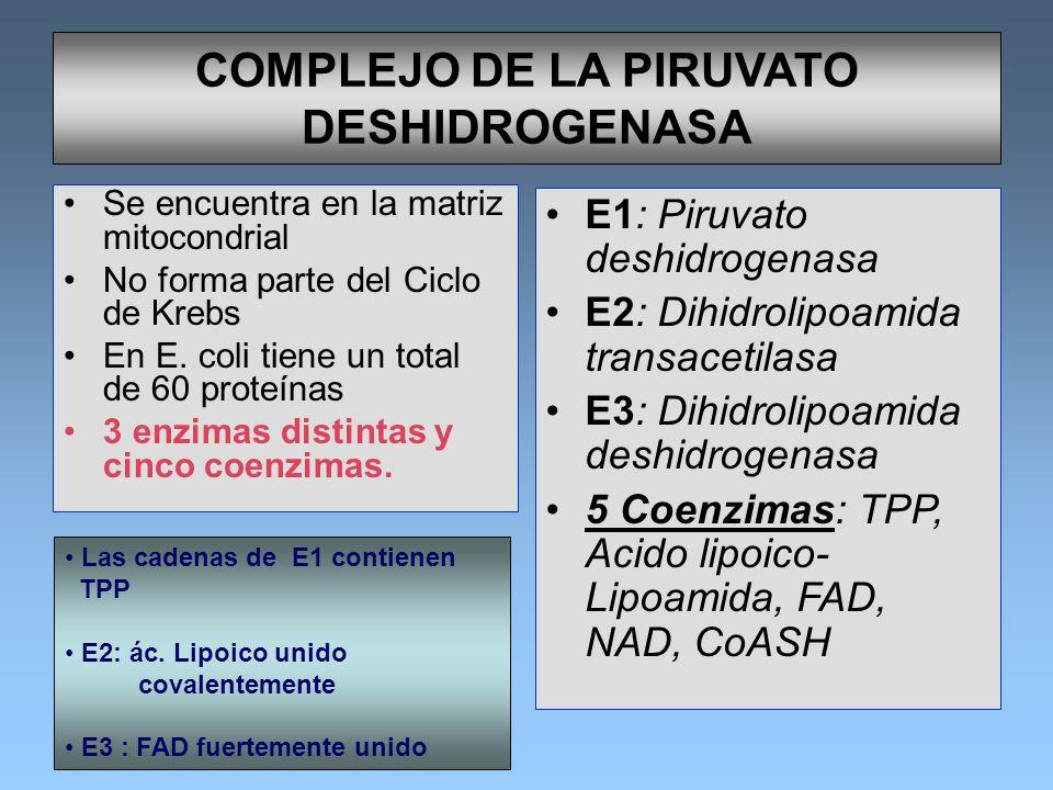 COMPLEJO DE LA PIRUVATO DESHIDROGENASA Se encuentra en la matriz mitocondrial No forma parte del Ciclo de Krebs En E. coli tiene un total de 60 proteí