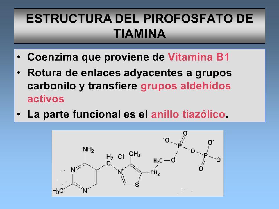 ESTRUCTURA DEL PIROFOSFATO DE TIAMINA Coenzima que proviene de Vitamina B1 Rotura de enlaces adyacentes a grupos carbonilo y transfiere grupos aldehíd