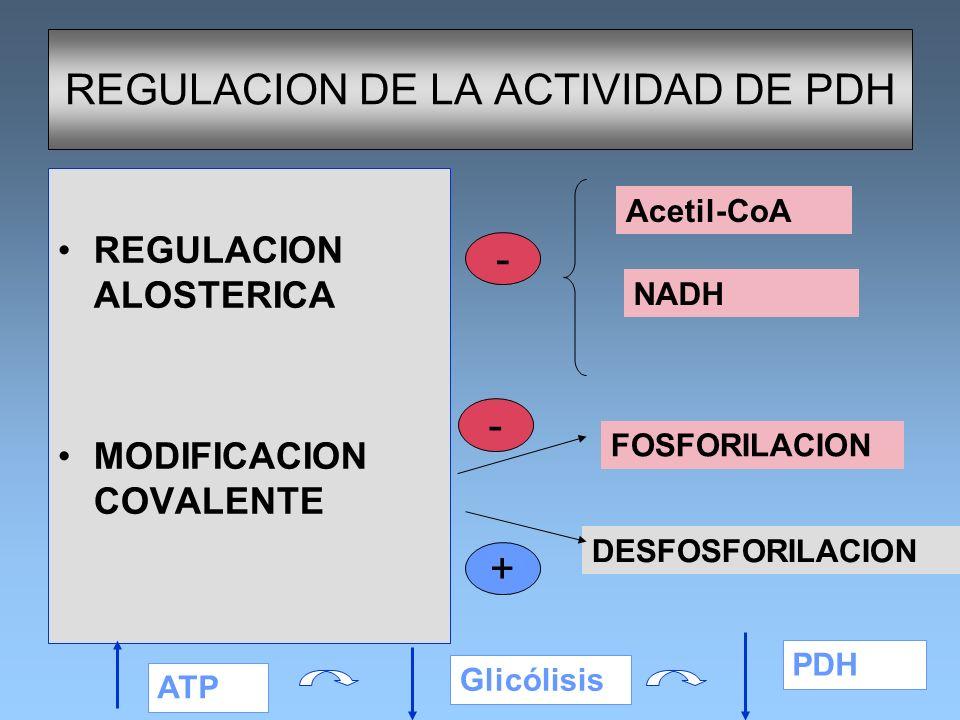 REGULACION DE LA ACTIVIDAD DE PDH REGULACION ALOSTERICA MODIFICACION COVALENTE Acetil-CoA NADH - FOSFORILACION DESFOSFORILACION - + ATP Glicólisis PDH