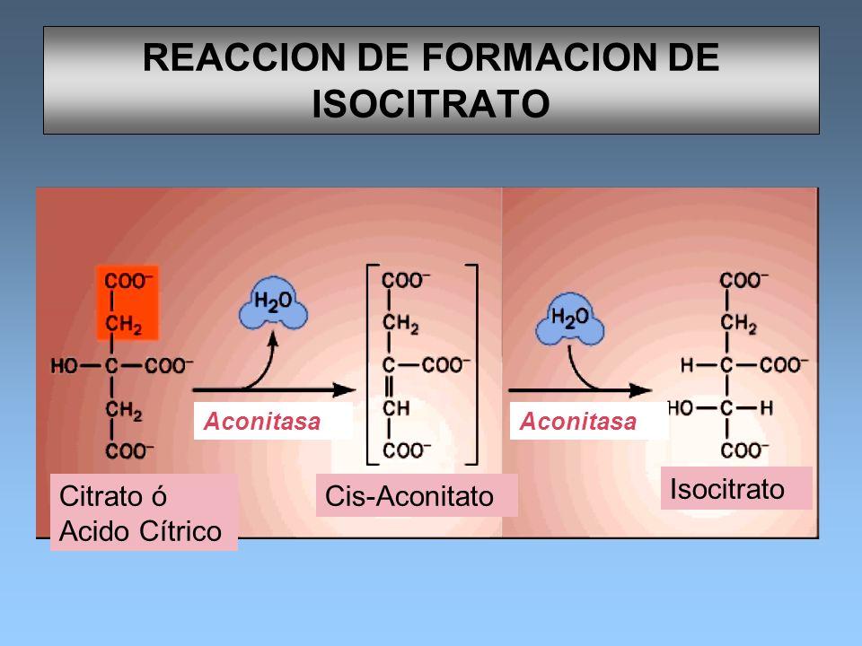 REACCION DE FORMACION DE ISOCITRATO Aconitasa Cis-Aconitato Isocitrato Citrato ó Acido Cítrico Aconitasa