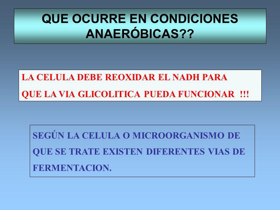 ESTRUCTURA DE LA COENZIMA A PRECURSORES -Mercaptoetilamina Acido pantoténico 3´fosfoadenosinadifosfato PARTICIPA EN LA TRANSFERENCIA DE GRUPOS ACILO