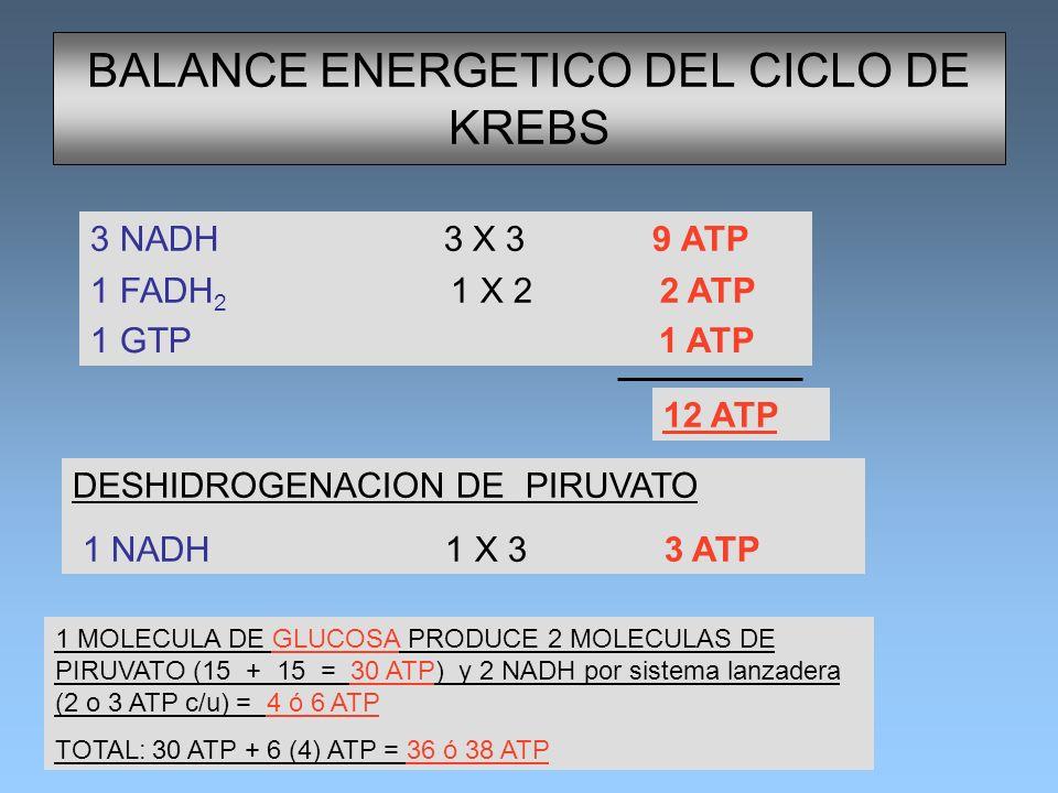 BALANCE ENERGETICO DEL CICLO DE KREBS 3 NADH 3 X 3 9 ATP 1 FADH 2 1 X 2 2 ATP 1 GTP 1 ATP 12 ATP DESHIDROGENACION DE PIRUVATO 1 NADH 1 X 3 3 ATP 1 MOL