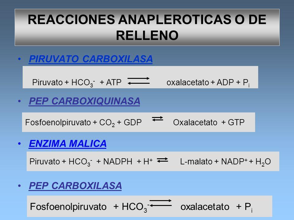 Piruvato + HCO 3 - + NADPH + H + L-malato + NADP + + H 2 O PIRUVATO CARBOXILASA PEP CARBOXIQUINASA ENZIMA MALICA PEP CARBOXILASA Fosfoenolpiruvato + C