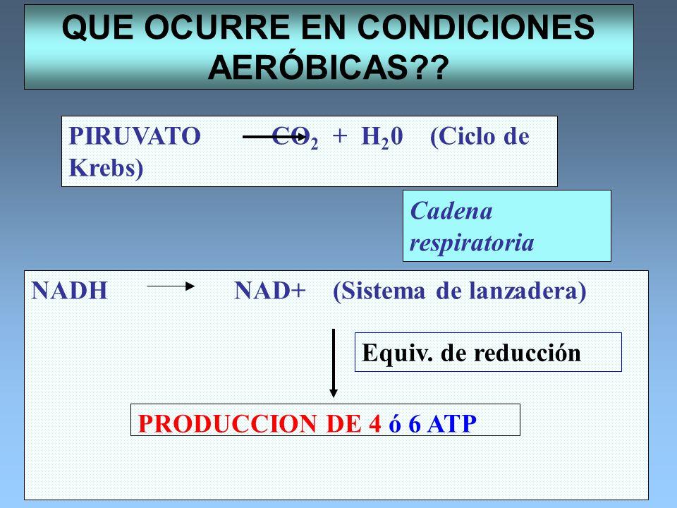 QUE OCURRE EN CONDICIONES AERÓBICAS?? PIRUVATOCO 2 + H 2 0 (Ciclo de Krebs) NADHNAD+ (Sistema de lanzadera) Equiv. de reducción Cadena respiratoria PR