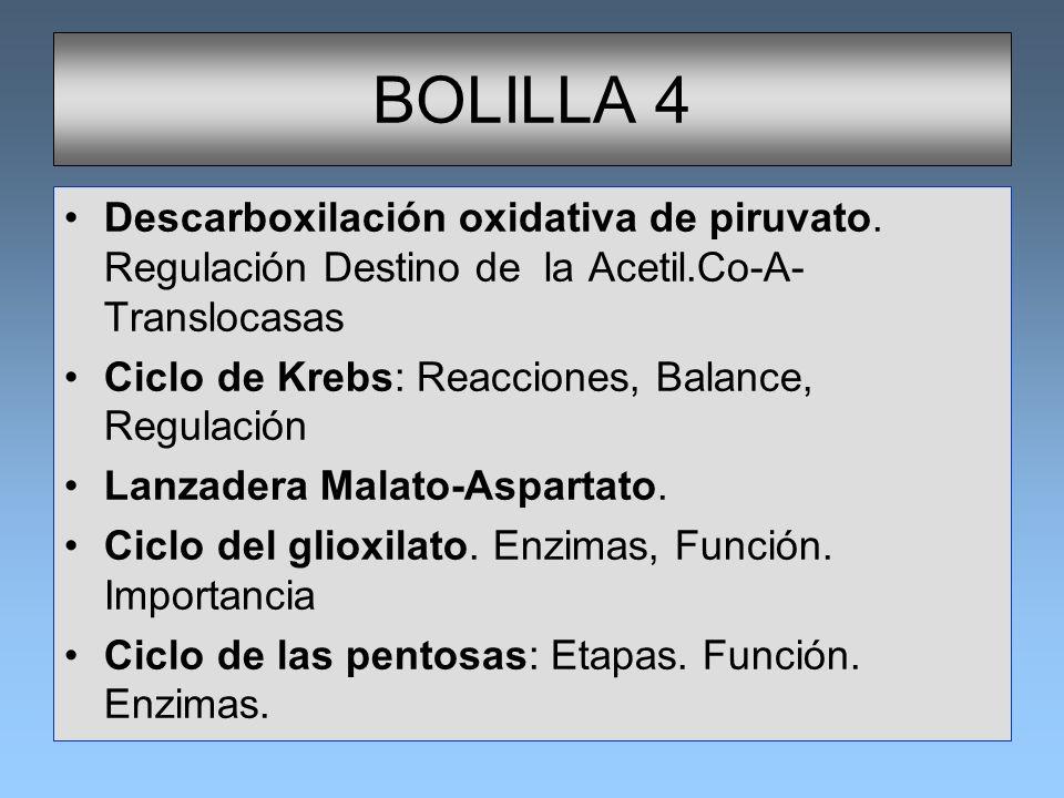 BOLILLA 4 Descarboxilación oxidativa de piruvato. Regulación Destino de la Acetil.Co-A- Translocasas Ciclo de Krebs: Reacciones, Balance, Regulación L