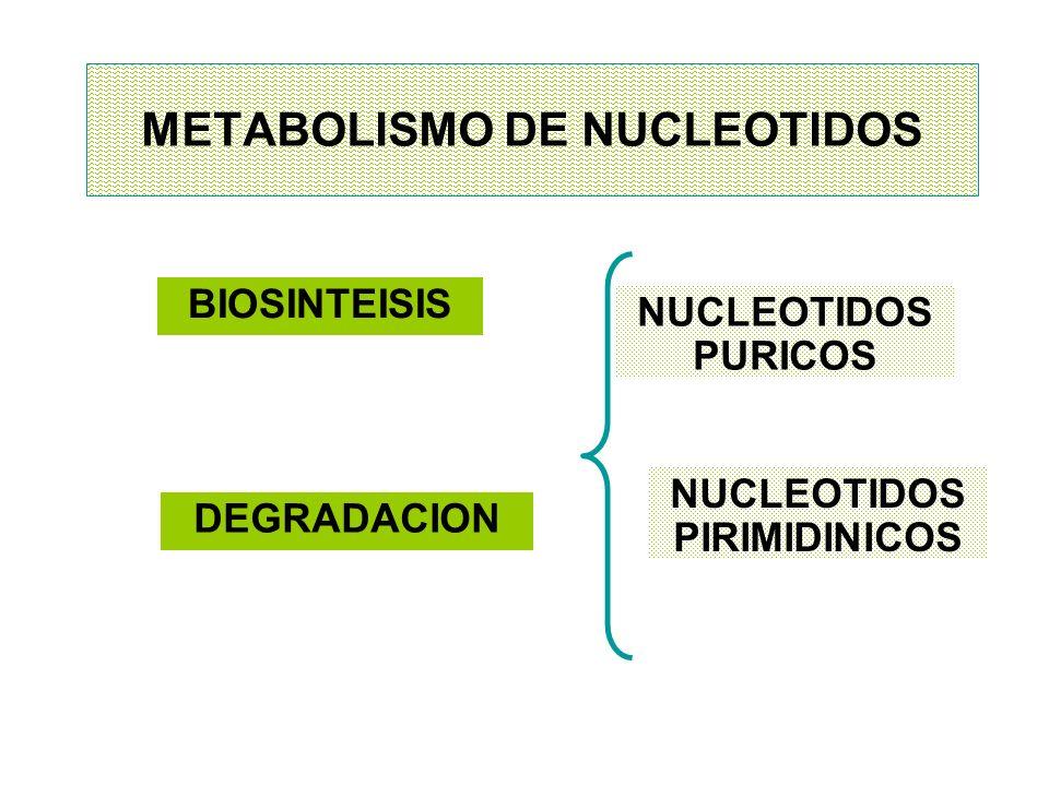 METABOLISMO DE NUCLEOTIDOS BIOSINTEISIS DEGRADACION NUCLEOTIDOS PURICOS NUCLEOTIDOS PIRIMIDINICOS