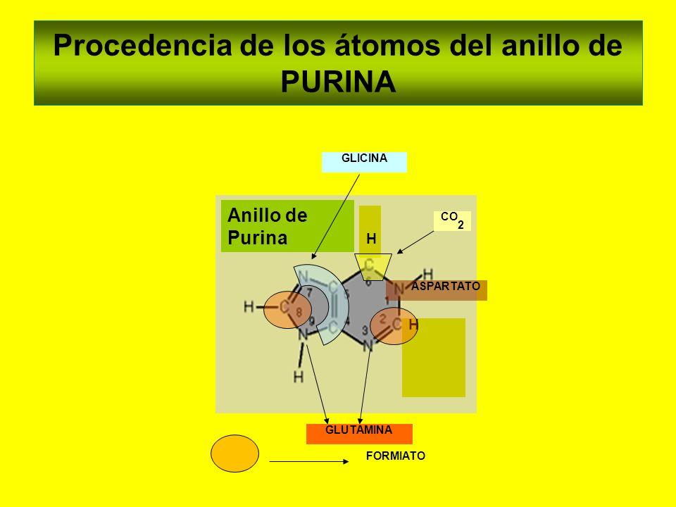 Procedencia de los átomos del anillo de PURINA Anillo de Purina H H GLUTAMINA FORMIATO ASPARTATO GLICINA CO 2