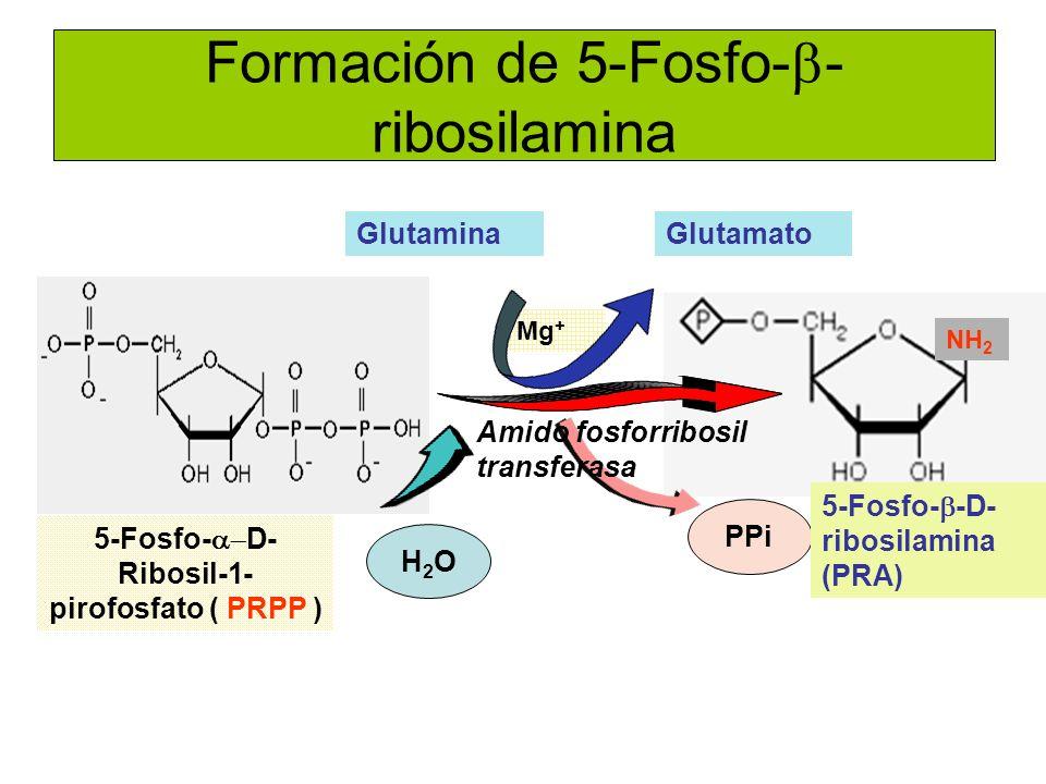 Formación de 5-Fosfo- - ribosilamina GlutaminaGlutamato H2OH2O PPi Mg + Amido fosforribosil transferasa NH 2 5-Fosfo- D- Ribosil-1- pirofosfato ( PRPP