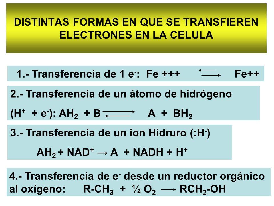 DISTINTAS FORMAS EN QUE SE TRANSFIEREN ELECTRONES EN LA CELULA 2.- Transferencia de un átomo de hidrógeno (H + + e - ): AH 2 + B A + BH 2 3.- Transfer