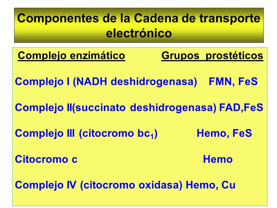 Componentes de la Cadena de transporte electrónico Complejo enzimático Grupos prostéticos Complejo I (NADH deshidrogenasa) FMN, FeS Complejo II(succin