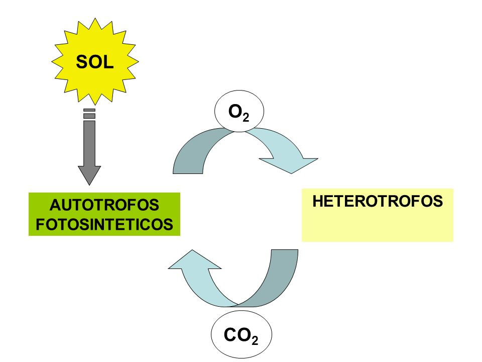 SOL AUTOTROFOS FOTOSINTETICOS HETEROTROFOS O2O2 CO 2